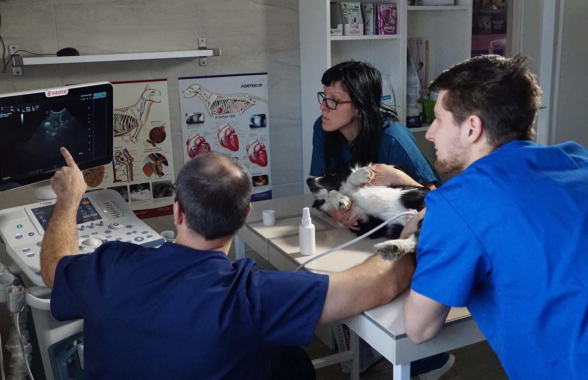 Ultrahang vizsgálat - Mátyás Állatorvos Központ