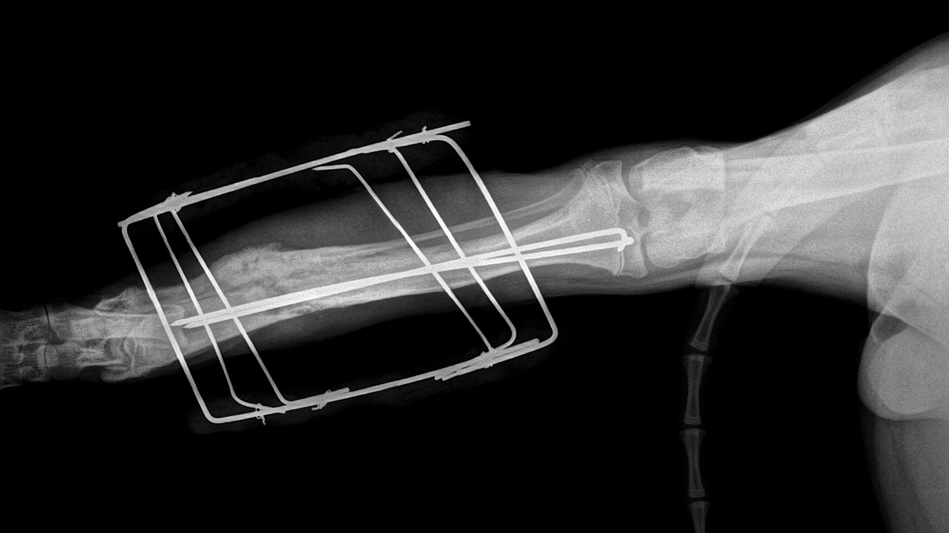 Csonttörés - Mátyás Állatorvos Központ