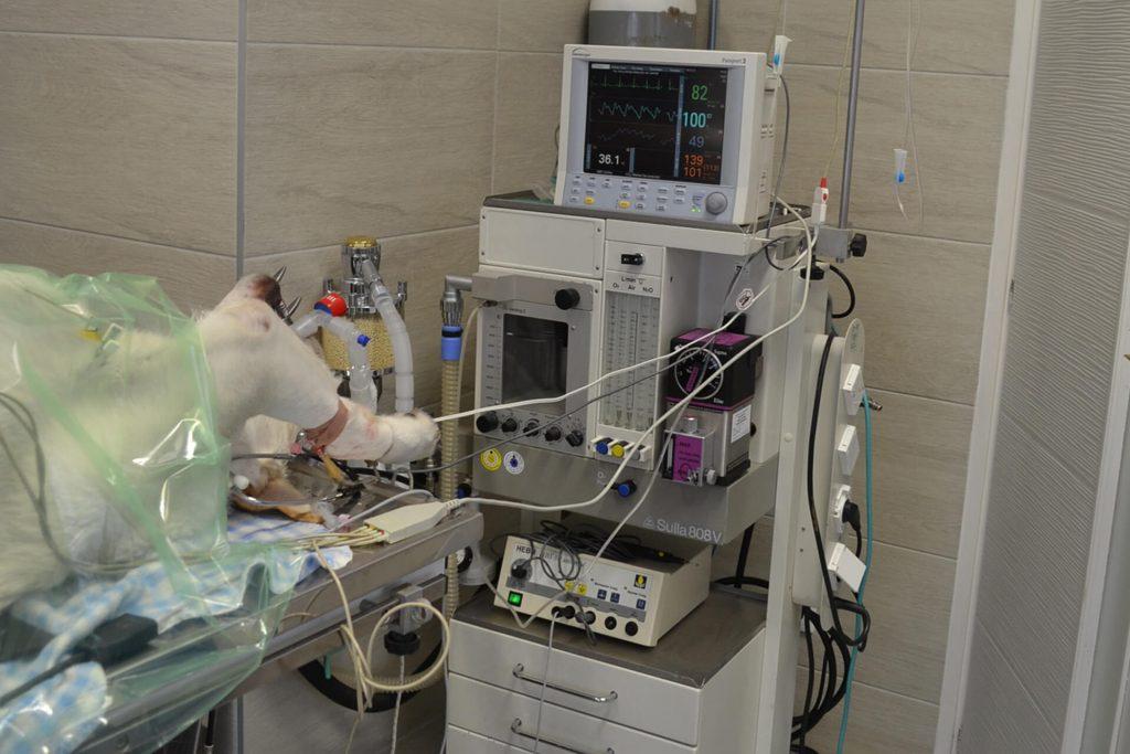 Sebészet - Mátyás Állatorvos Központ